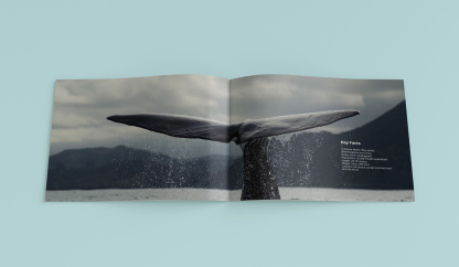 Editorial design, About Whales, 2015, II