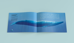 Editorial design, About Whales, 2015, III