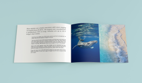 Editorial design, About Whales, 2015